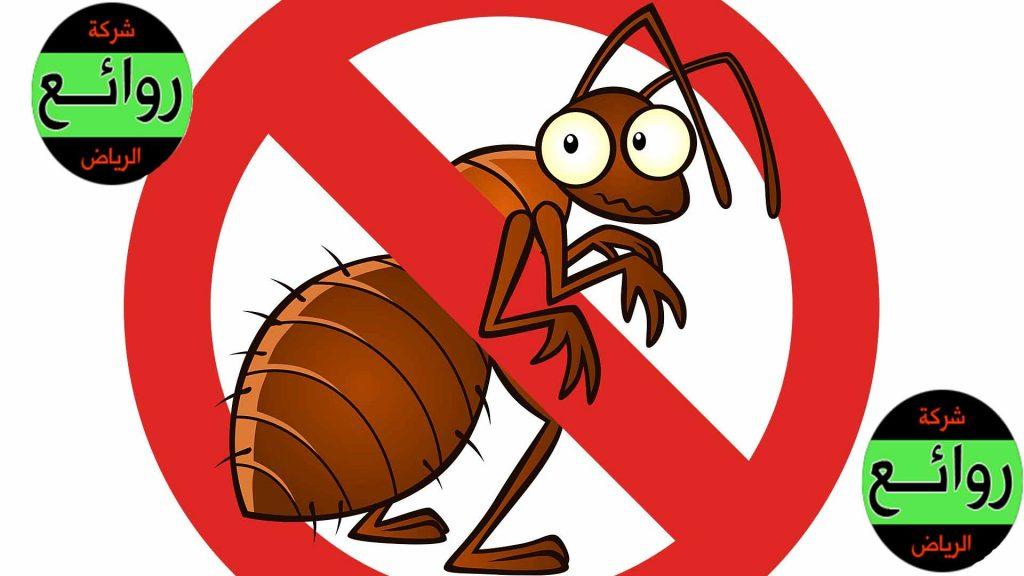 مكافحة حشرات بالقصيم
